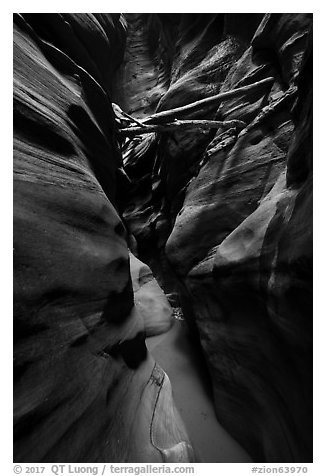 Logs jammed high in Pine Creek Canyon narrows. Zion National Park (black and white)