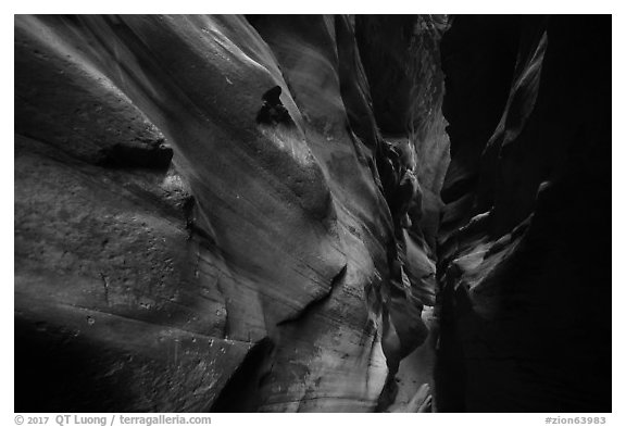Narrow canyon walls sculptured by flash floods, Pine Creek Canyon. Zion National Park (black and white)