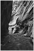 Tall sandstone walls of Wall Street, the Narrows. Zion National Park, Utah, USA. (black and white)