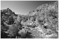Virgin river and Watchman, spring morning. Zion National Park, Utah, USA. (black and white)