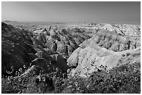 Sunflowers above badlands. Badlands National Park, South Dakota, USA. (black and white)
