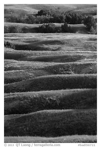 Ridges with early summer wildflowers, Badlands Wilderness. Badlands National Park (black and white)