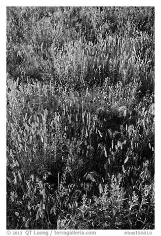 Mixed grasses, Stronghold Unit. Badlands National Park (black and white)