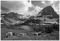 Mountain goats, Hidden lake and peak. Glacier National Park ( black and white)