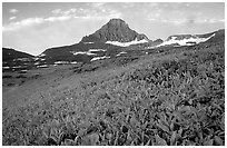 Wildflowers and peak at Logan pass. Glacier National Park, Montana, USA. (black and white)