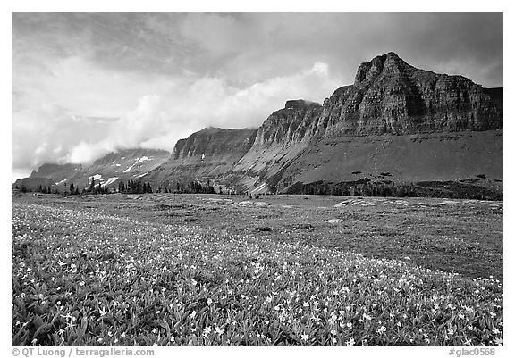 Garden wall from Logan pass. Glacier National Park (black and white)