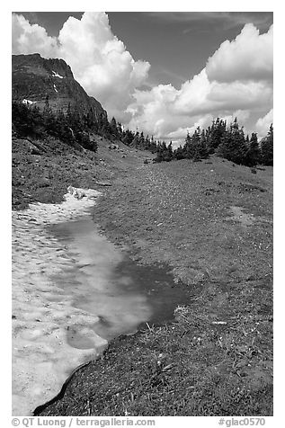 Neve with mountain goat, Hanging gardens, Logan pass. Glacier National Park (black and white)