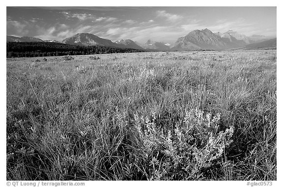 Prairie and Lewis range. Glacier National Park (black and white)