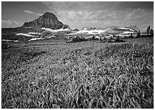 Alpine meadow with wildflowers and triangular peak, Logan Pass. Glacier National Park, Montana, USA. (black and white)