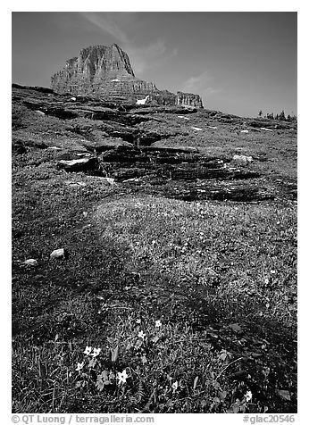 Stream at hanging gardens, Logan pass. Glacier National Park (black and white)