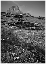 Stream at hanging gardens, Logan pass. Glacier National Park, Montana, USA. (black and white)