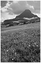 Meadow with wildflower carpet and triangular mountain, Logan pass. Glacier National Park ( black and white)