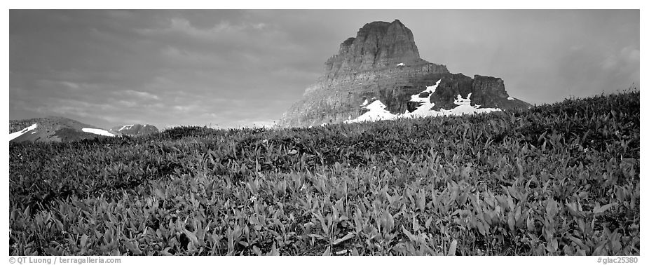 Alpine scenery with triangular peak rising above meadows. Glacier National Park (black and white)