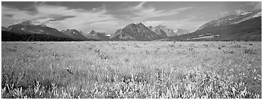 Prairie and mountains. Glacier National Park (Panoramic black and white)