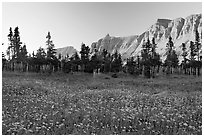 Meadow with wildflowers and Garden Wall at sunset. Glacier National Park ( black and white)