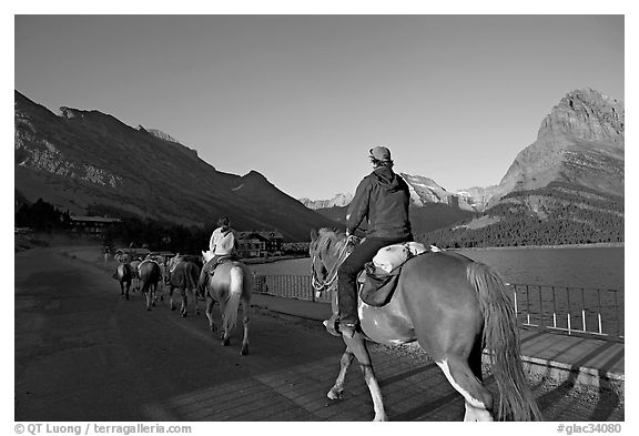 Horses on the shores of Swiftcurrent Lake, sunrise. Glacier National Park (black and white)