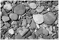 Colorful pebbles in a stream. Glacier National Park, Montana, USA. (black and white)