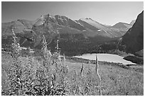 Fireweed and Grinnell Lake. Glacier National Park, Montana, USA. (black and white)