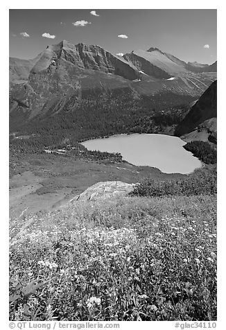 Wildflowers high above Grinnel Lake, with Allen Mountain in the background. Glacier National Park (black and white)