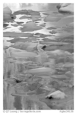 Blue icebergs floating on reflections of rock wall, late afternoon. Glacier National Park (black and white)