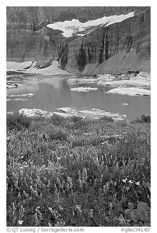 Wildflowers, Upper Grinnell Lake, and Salamander Falls and Glacier. Glacier National Park (black and white)