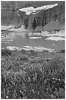 Wildflowers, Upper Grinnell Lake, and Salamander Falls and Glacier. Glacier National Park ( black and white)
