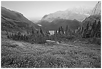 Wildflower meadow and Many Glacier Valley, late afternoon. Glacier National Park, Montana, USA. (black and white)