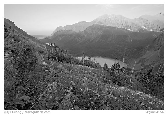 Alpine wildflowers, Grinnell Lake, and Allen Mountain, sunset. Glacier National Park (black and white)