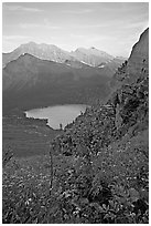Alpine wildflowers and stream, Grinnell Lake, and Allen Mountain, sunset. Glacier National Park ( black and white)