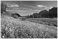 Alpine meadow with wildflowers, Logan Pass, morning. Glacier National Park, Montana, USA. (black and white)