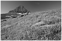 Alpine wildflowers and Reynolds Mountain, Logan Pass, morning. Glacier National Park, Montana, USA. (black and white)