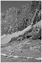 Couple hiking on trail amongst wildflowers near Hidden Lake. Glacier National Park ( black and white)
