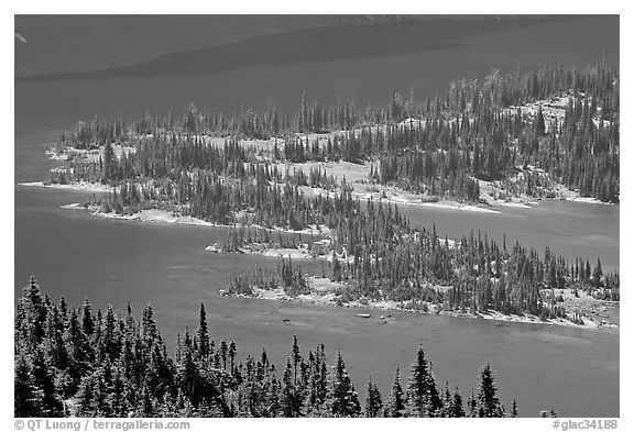 Conifers and Hidden Lake. Glacier National Park (black and white)