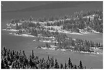 Conifers and Hidden Lake. Glacier National Park, Montana, USA. (black and white)