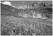 Fireweed below the Garden Wall. Glacier National Park ( black and white)