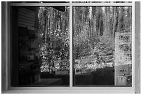 Forest, Apgar visitor center window reflexion. Glacier National Park ( black and white)