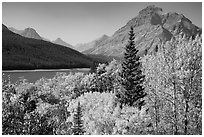Autumn color, Rising Wolf Mountain, Lower Two Medicine Lake. Glacier National Park ( black and white)