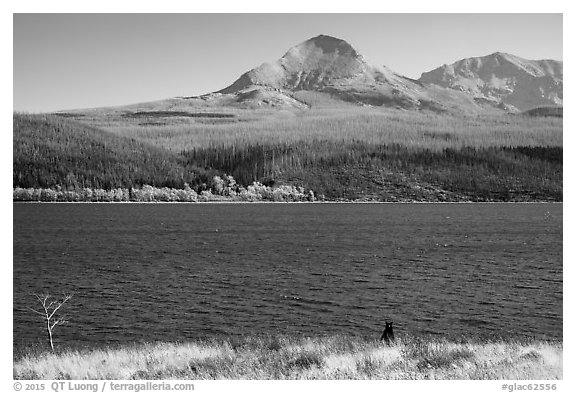 Black Bear, Saint Mary Lake. Glacier National Park (black and white)