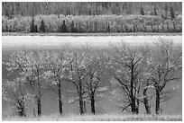 Trees in autumn foliage on both shores of Saint Mary Lake. Glacier National Park ( black and white)