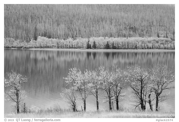 Trees in autumn foliage, burned forest, and reflections, Saint Mary Lake. Glacier National Park (black and white)