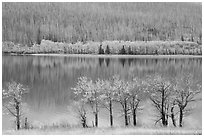 Trees in autumn foliage, burned forest, and reflections, Saint Mary Lake. Glacier National Park ( black and white)