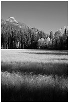 Meadow in autumn, North Fork. Glacier National Park ( black and white)