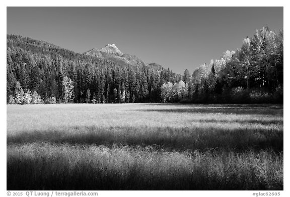 Shadows in autumn meadow. Glacier National Park (black and white)