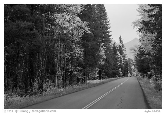 Road in autum near West Glacier. Glacier National Park (black and white)