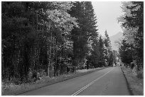 Road in autum near West Glacier. Glacier National Park ( black and white)