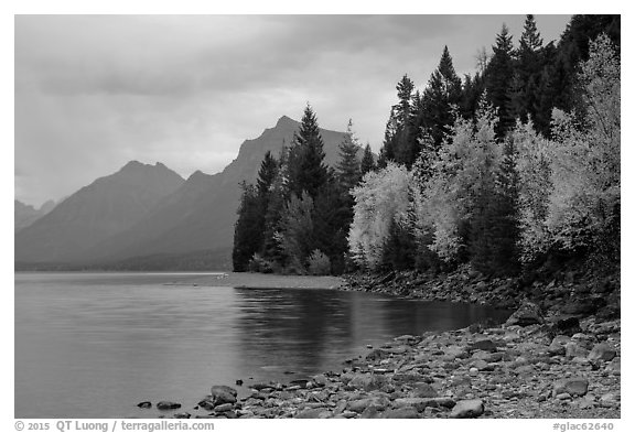 Trees in autumn color and Lake McDonald. Glacier National Park (black and white)