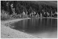 Gravel beach and trees in autun foliage, Lake McDonald. Glacier National Park ( black and white)