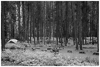 Apgar Campground in autumn. Glacier National Park ( black and white)