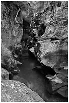 Avalanche gorge in the fall. Glacier National Park ( black and white)