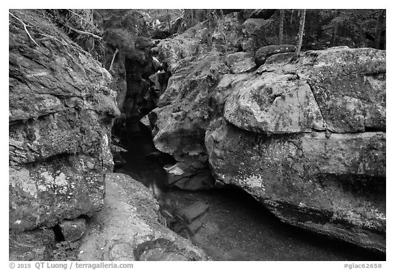 Avalanche Creek in autumn. Glacier National Park (black and white)